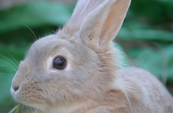 ウサギ,鼻,ヒクヒク