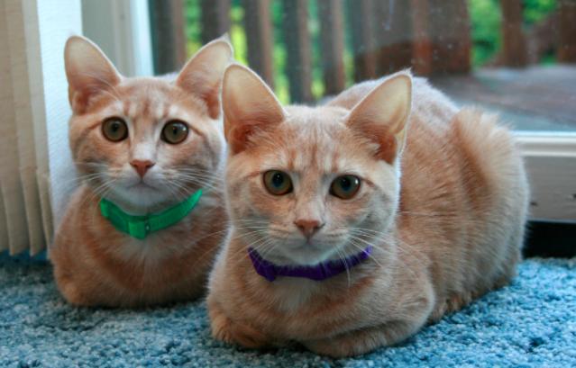 猫,香箱座り,リラックス,理由,座り方