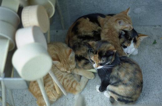 猫,集会,画像,理由,夜の集まり