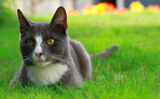 猫,雑学,豆知識,