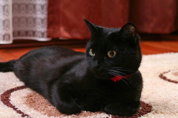 黒猫,8月17日,黒猫感謝の日