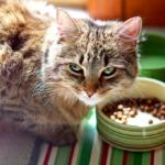 食欲がない?エサを食べない?猫のごはんの与え方。