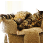 【おすすめ一覧】猫にとってキャットタワーが必要な理由とは?