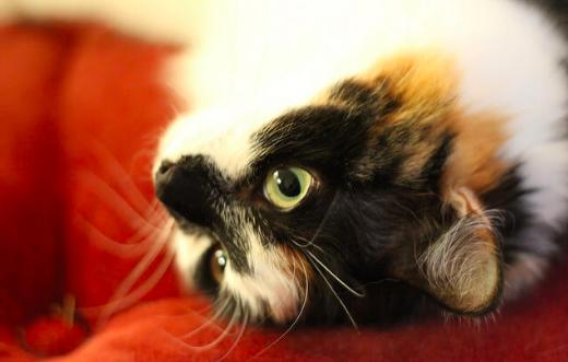 猫の日(2/22)以外にもある?猫にまつわる記念日のまとめ。