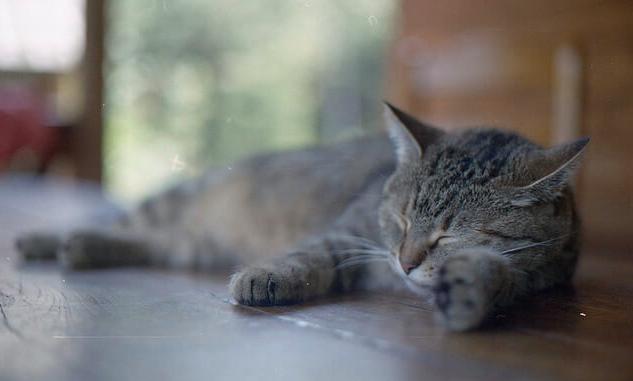 猫,熱中症,原因,対策,予防策,暑さ