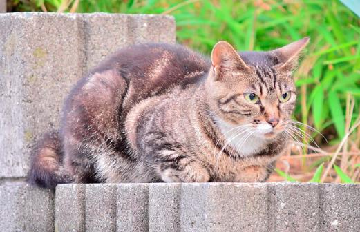猫,花粉症,くしゃみ,目やに,画像,