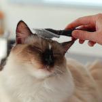 猫,ブラッシング,コツ,毛づくろい,グルーミング,