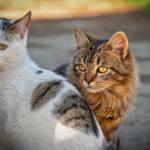 お尻のにおいをお互いにクンクン?猫の不思議な行動に関する雑学。