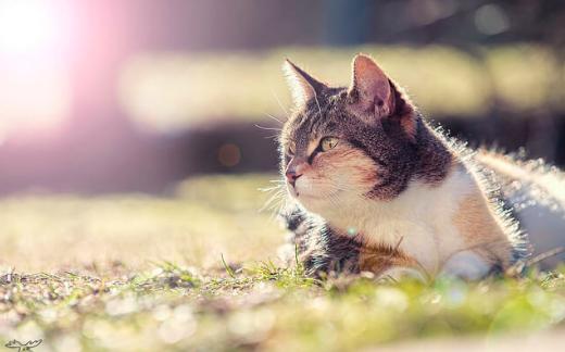 猫,日光浴,効果,写真,画像,ノミ,ダニ
