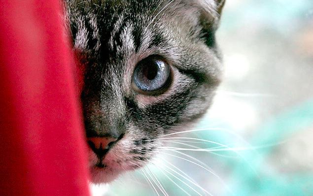 猫,脱走,探し方,防止,対応策,SNS