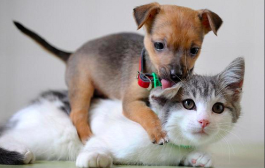 犬,猫,画像,可愛い,,