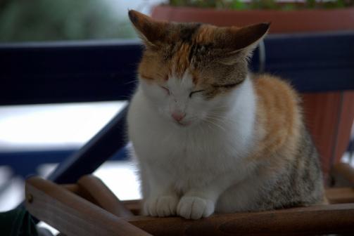 猫,喉,音,鳴らす,ゴロゴロ,理由
