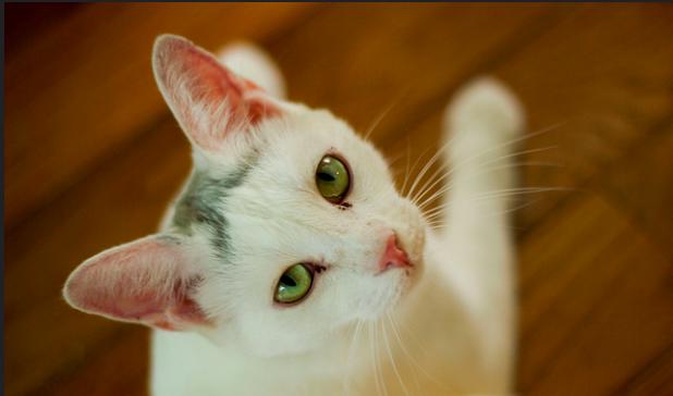 猫,聴覚,どのくらい,雑学,豆知識