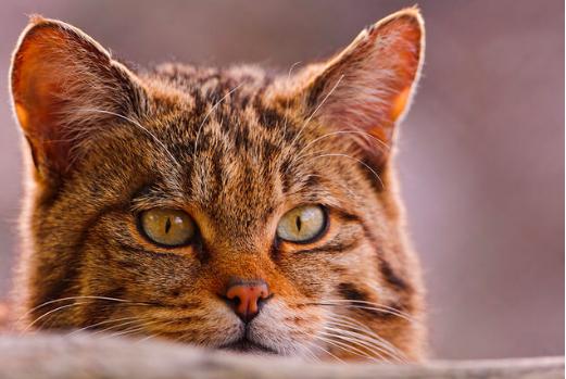 猫,風邪,くしゃみ,鼻炎