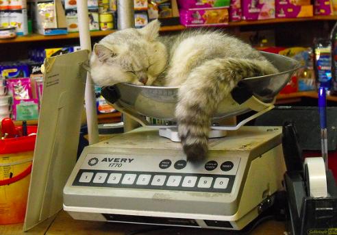 猫,体重計,画像