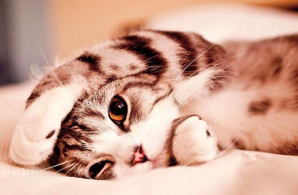 猫,画像,可愛い,頭突き,画像