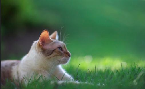 猫アレルギー,原因,血液検査,症状,対策,掃除,RAST検査
