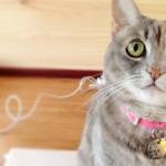 猫,首輪,付け方,メリット,デメリット,迷子防止,事故