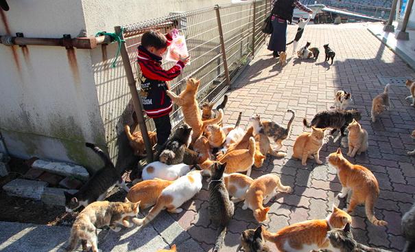 青島,猫の島,猫の楽園,