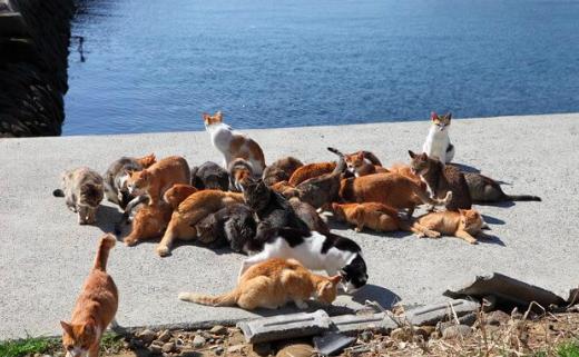 愛媛県,青島,猫の島,猫の楽園,