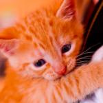 猫がなつく人にはある特徴があった!なつきやすくなるコツとは?