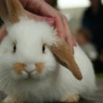 ウサギははなぜ鼻をヒクヒク動かすの?その理由とは?