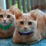 猫の「香箱座り」はリラックスの証拠??猫の気持ちが現れる行動の雑学♪