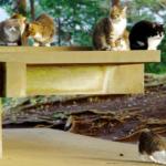 「猫の集会」の目的とは?考えられる3つの説について。