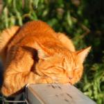 【猫の雑学】知っておきたい習性に関する豆知識10選。