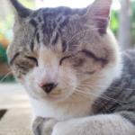 猫も花粉症になるの?予防や治療方法・注意事項のまとめ。