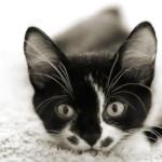「ウールサッキング」ってどんな症状??猫の気になる行動について。