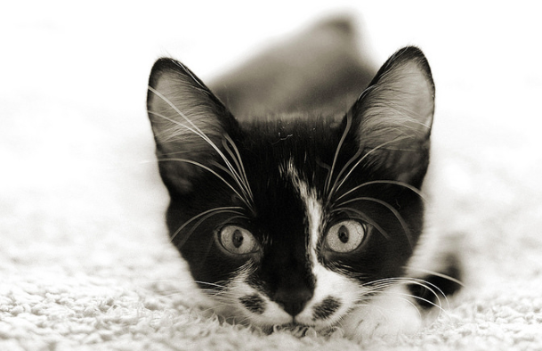 猫,ウールサッキング,毛布,毛糸,異食症,症状,原因,理由
