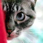 【保存版】猫が脱走した時に取るべき対応は?探し方と見つからない時の対応策。