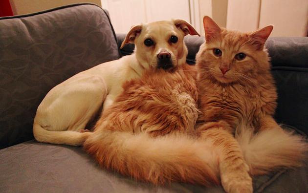 【ペットについて】犬や猫の換毛期っていつ?必要な対策は?