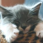 猫の喉のゴロゴロは人間にも効果があった!?喉を鳴らす習性の雑学。