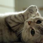猫が自分の爪を噛む?引っ張る?ちょっと心配になるこの行動の原因と対策は?