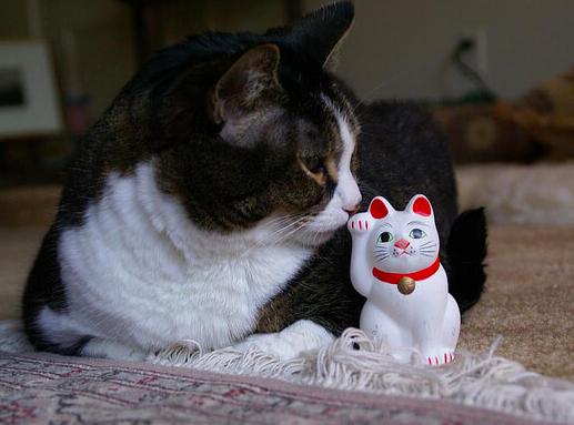 招き猫,由来,猫,右手,左手,幸福,画像