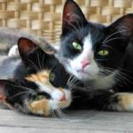 ゴロゴロ♪猫が喉を鳴らす理由は?隠された意外な効果とは?