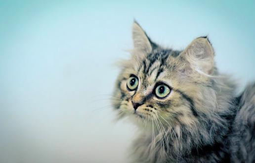 猫にまつわる不思議な雑学。何もないところをじっと見るのはなぜ?