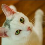 猫の聴覚はこんなにスゴイと感じる豆知識。好きな音・嫌いな音がある??