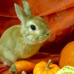 水菜やチンゲン菜はOK?うさぎに与えて良い野菜一覧。