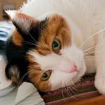 猫の風邪はウイルス性の病気?治療の方法は?