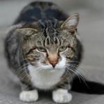 猫のくしゃみの原因と対策。鼻炎やアレルギーなど確認したい4つの注意事項。