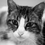 猫を飼う前に!!猫アレルギーの検査ってどんなもの??症状は緩和できる??