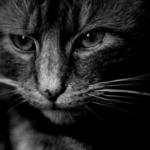 【猫アレルギー】症状一覧と対策方法まとめ。