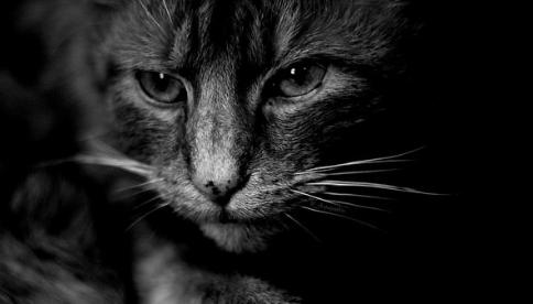 猫アレルギー,症状,風邪,鼻水,目やに,かゆみ