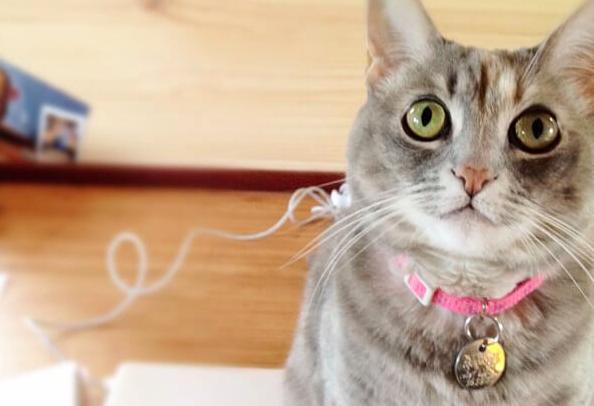 猫の首輪選び。メリット・デメリットとつけ方の注意点。事故対策のためにすべきことは??