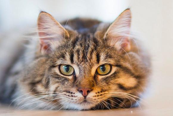 【要チェック】猫が下痢をしてしまった!?原因と適切な対処法のまとめ。