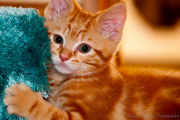 【猫のしつけ】爪とぎを家具や壁でさせない方法は?