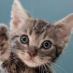 猫のひげの役割って?便利な機能など理解を深める8の雑学。